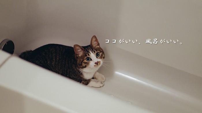 『Paperwhite+Unlimited+風呂=成長』という等式の発見について